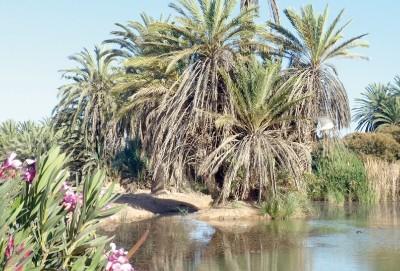 Oasis de Tighmert